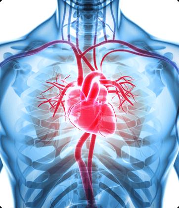 Advanced Cardiology Associates - Heart Disease